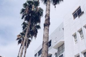 art deco, miami, miami palm trees, art deco palms